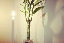 Home Bamboo Designs