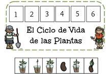 Ciclo vital de las plantas