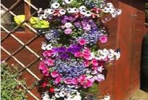 virágültetés virágtartók
