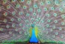 Colorful Things / by Lisa Brown