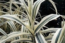 Plantas - Plants - Plantes