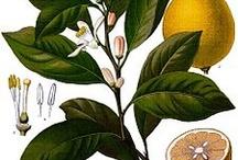 målningar växter