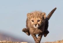 Cute animal photos / Cute animal shots... Good writing prompts