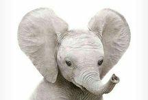 Animals | Elephants