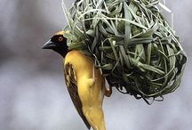 Aspirational Birds / Birds I hope to see
