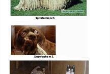 Śmieszne obrazki