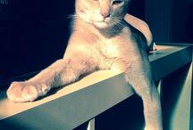 Jude / My lovely cat
