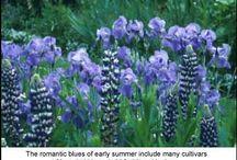 08.Blue Gardens