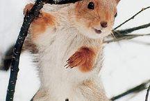 esquiròls / écureuils