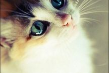 Cats / Kissat