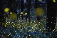 lightly fireflies