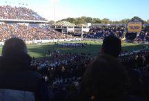 Pitt Panther Athletics