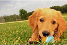 Puppy / by Corey Borgen