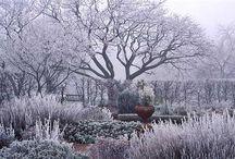 talvi puutarhassa