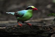 birds / by Bonnie Sugg
