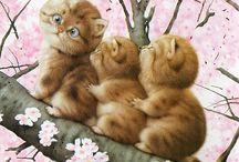 Kediler-Cats / Kediler hakkında fotoğraflar