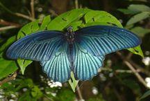 Butterflies / by Heather Singler Harris