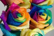 Colour full Rose