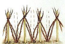 franboisier