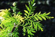 Plantes & vertus