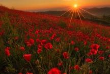 Gods Beautiful World / beautiful places god has designed =D