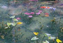 Seki Pond