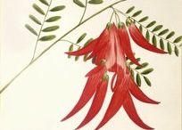 NZ flower