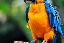 jovey's birds
