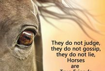 horses ❤❤
