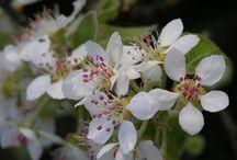 own photos / spring