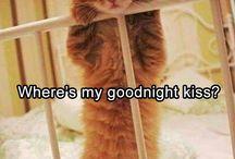 Gattini morbidosi