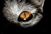 Katten / over katten foto's