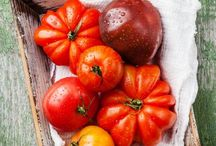 Tips for Growing Tomatoes / Board dedicated to the world of growing tomatoes!