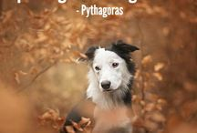 Animal quotes <3 / What it means to have a pet that is truly part of the family