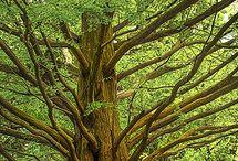 -TREES-