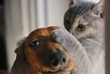 ♥♥ For the Love of Pets ♥♥ / by Dawn Smith