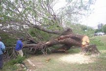 Leons Tree Service / Tree services and stump grinding