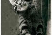 Mysterious but incredibly adorable Cats