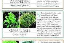 healty weeds
