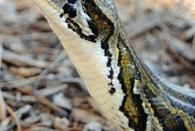 Reptiles bird and amphibians / http://topphotography101.weebly.com/