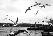 Biraz İstanbul.