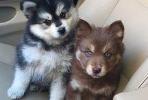 Animals / The cutest animals :)
