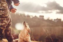 guiding your dog's behavior
