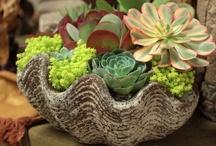 planters & terrariums
