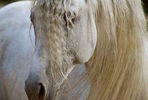 horses / by Heather Johnson