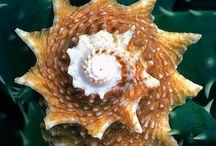 Deniz kabukları ;)