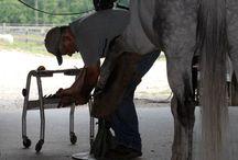 Horses Info / interesting horse care