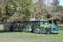 Parco di San Rossore / Escursioni nel verde, gite in battello, Bike Tour, in trenino nel parco, passeggiate a cavallo