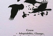 Raven /Holló/