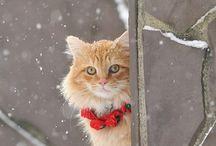 cats / by Sydney Traylor